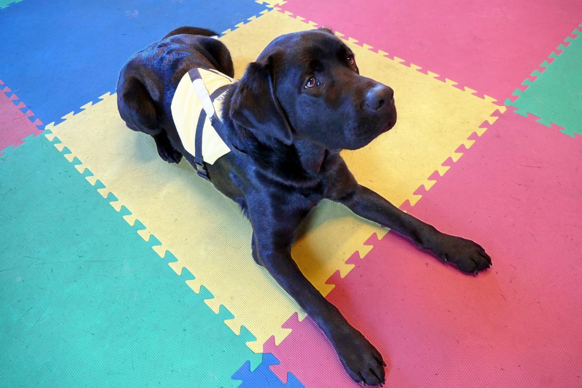 Stigao novi terapijski pas Aron