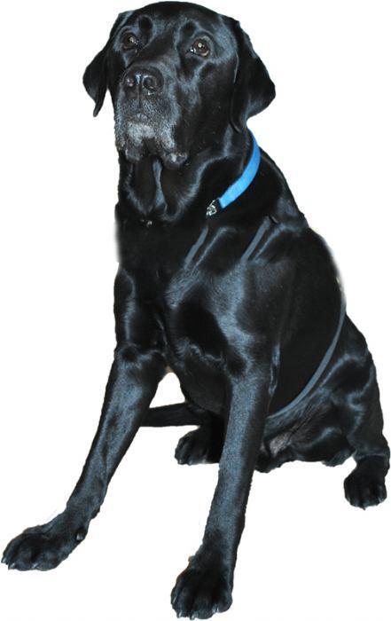 Terapijski pas Mak
